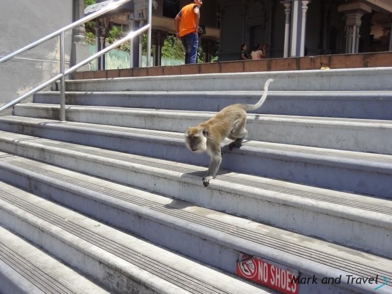 Batu Caves małpa