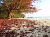 Czerwone liście na Perhentian Besar