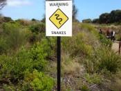 Warning Snakes, Australia