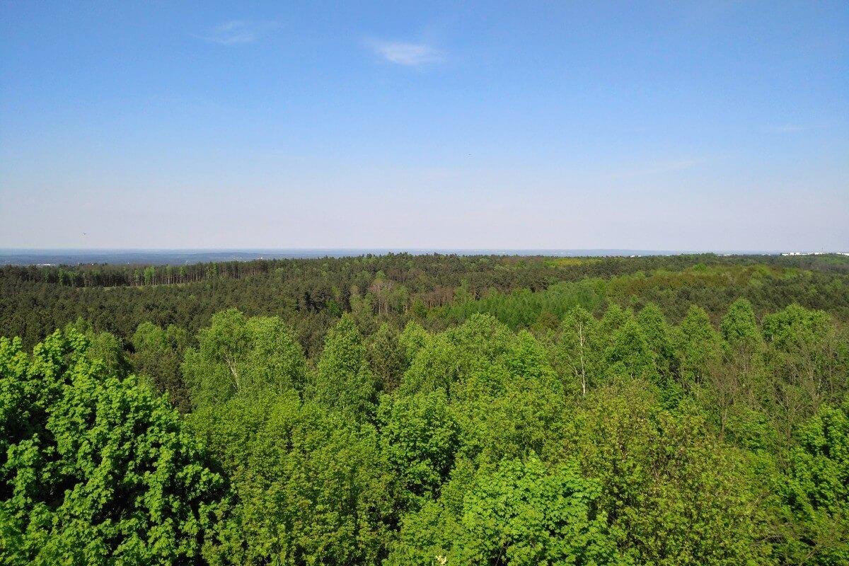 Lasy pod Zieloną Górą